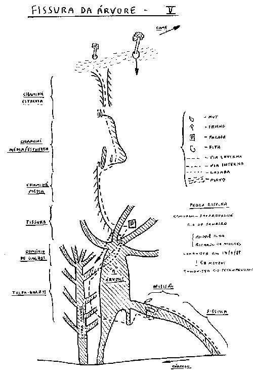 fissura-da-arvore